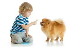 孩子训练波美丝毛狗狗 背景查出的白色 免版税图库摄影