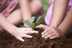 孩子递一起种植在黑土壤的年轻树 库存图片