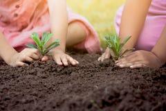 孩子递一起种植在黑土壤的年轻树 图库摄影