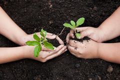 孩子递一起种植在黑土壤的年轻树 库存照片