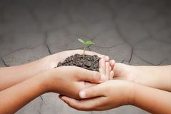孩子递拿着土壤用在破裂的地面的新芽 库存照片
