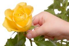 孩子采取一朵黄色玫瑰 库存图片