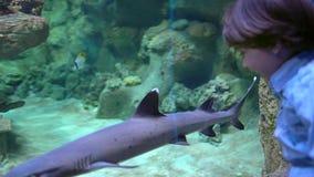 孩子,小男孩观看,看在下面水水族馆的鱼在oceanarium 宠物店 男孩看鱼游泳 影视素材