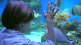孩子,小男孩观看,看在下面水水族馆的鱼在oceanarium 宠物店 男孩看鱼游泳 股票录像