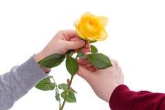 孩子给一朵黄色玫瑰 免版税库存照片