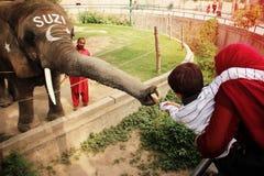 孩子给一头大象SUZI捐钱在拉合尔动物园里 免版税库存图片