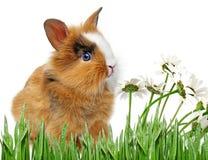 婴孩小的兔子 免版税库存图片