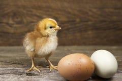婴孩小鸡用在土气背景的两个农厂新鲜的鸡蛋 库存照片