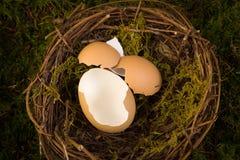 婴孩巢数字式背景 图库摄影