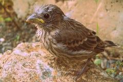 婴孩摆在鸟的室内燕雀 图库摄影