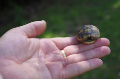 婴孩森林乌龟 免版税库存照片