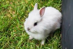 婴孩白色小兔 免版税库存照片