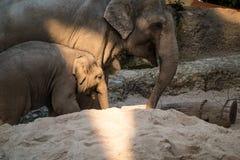 婴孩的大象和走动它的母亲动物园的 免版税库存照片