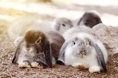 婴孩荷兰在公园砍兔子 免版税图库摄影
