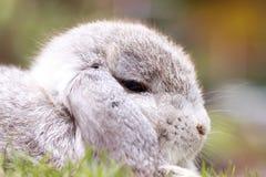 婴孩荷兰在公园砍兔子 免版税库存图片