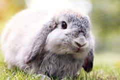 婴孩荷兰在公园砍兔子 免版税库存照片