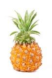 婴孩菠萝 库存照片