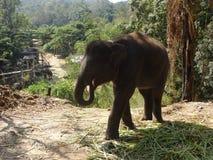 2009年婴孩被采取的大象照片 库存图片