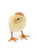 婴孩鸡和蛋壳作为帽子 库存照片