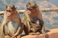婴孩系列修饰她的短尾猿猴子母亲 免版税图库摄影