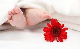 婴孩结算与在前景的一朵花 免版税库存照片