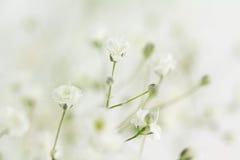 婴孩` s呼吸补白花背景  库存图片