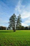 孪生在绿草域的结构树 免版税库存图片