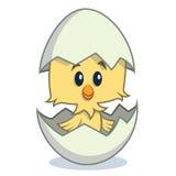 孵化从鸡蛋的逗人喜爱的动画片小鸡 库存照片