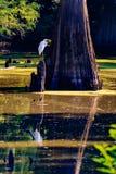 宁静在沼泽 库存图片