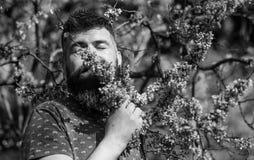 宁静概念 有胡子的在平安的面孔的人和髭在花附近在晴天 行家享受芳香  免版税库存照片