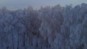 宁静的夜晚冷淡的森林 影视素材