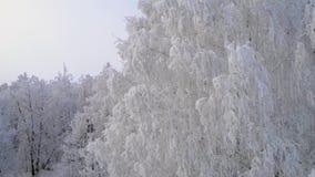 宁静的夜晚冷淡的森林 股票视频