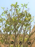 它是春天 好的树&蓝天 免版税图库摄影