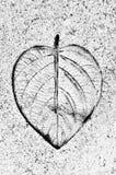 在浅浮雕的叶子在水泥地板上。 免版税库存照片