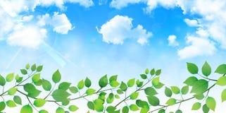 它留下新绿色树背景 免版税库存图片