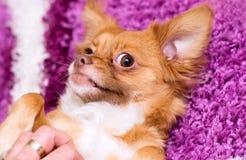 它的大师被拥抱的狗 免版税库存照片