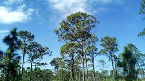 它的自然状态的佛罗里达 库存图片