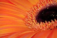 它的Bloomin `桔子 免版税库存照片