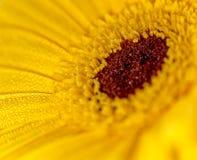 它的Bloomin `黄色 免版税库存照片