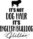 它\'s不是狗毛,它\'s英国牛头犬闪烁 向量例证