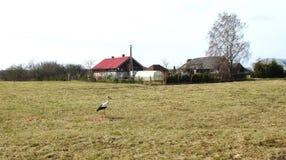 宅基和鹳鸟在春天,立陶宛 库存图片