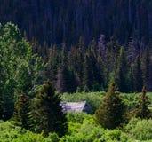 宅基客舱在阿拉斯加的森林 免版税图库摄影