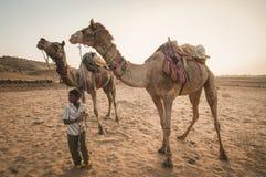 守卫他的骆驼 免版税库存照片
