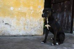 守卫他的master& x27的狗; s室 免版税库存照片
