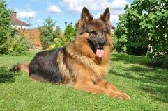守卫房子的狗 免版税图库摄影