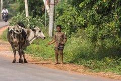 守卫母牛的少年在迈索尔,印度附近 免版税库存照片