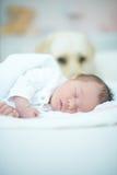 守卫睡觉的婴孩的狗 免版税库存照片