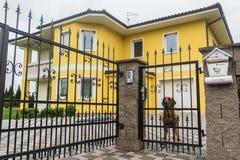 守卫私有疆土的狗 图库摄影