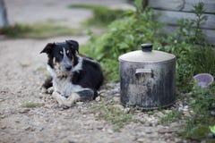 守卫罐的博德牧羊犬 库存图片