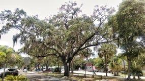 安全港口佛罗里达都市风景 免版税库存照片